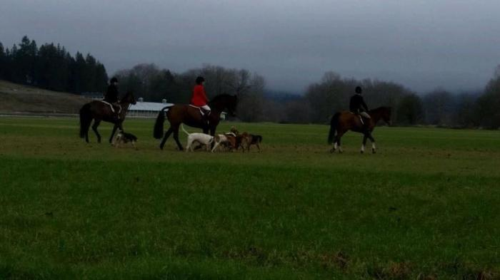 Riders and hounds of Woodbrook Hunt Club